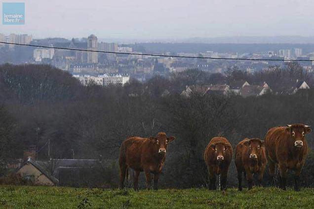 Sarthe elections la chambre d 39 agriculture comment a marche le maine libre - Chambre d agriculture 49 ...