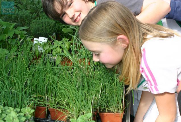 Les enfants apprennent à reconnaître les plantes aromatiques par la vue, le toucher et l'odorat.