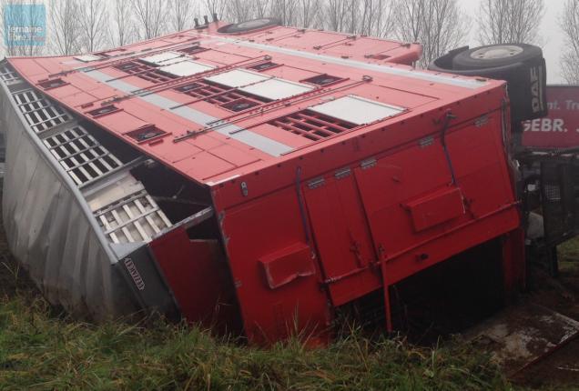 Un camion transportant des bovins a été accidenté ce mardi matin, entraînant la fermeture de l'A11.