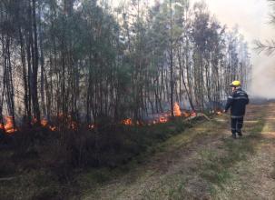 Brette-les-Pins. Important feu de forêt : 17 hectares brûlés, un pompier blessé